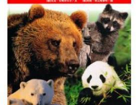 熊的故事pdf
