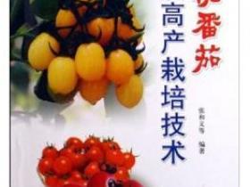 樱桃番茄优质高产栽培技术pdf
