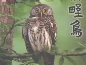 杭州野鸟pdf